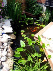 A beautiful Fish pond